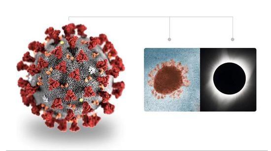 CDC 创建的新冠病毒立体模型。